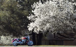 spring-motorcycle-riding-1