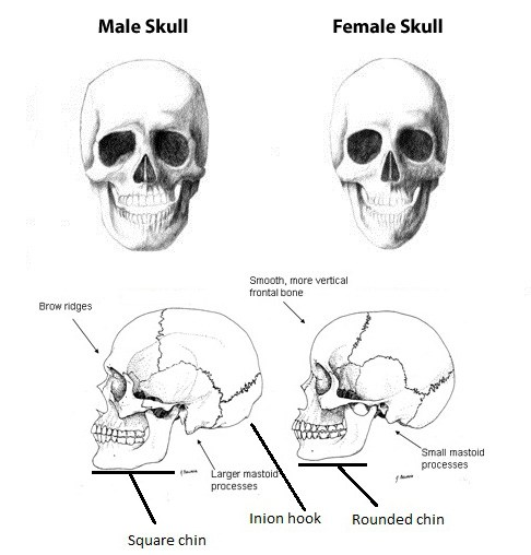 Male-Female-Skull